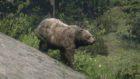 【レッドデッドリデンプション2】『伝説の熊』の手がかりの場所・簡単な倒し方【RDR2】
