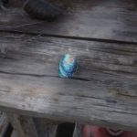 【レッドデッドリデンプション2 攻略】『アワビの貝殻のかけら』の入手方法・入手場所【RDR2】